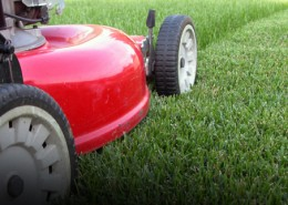 comment tondre sa pelouse